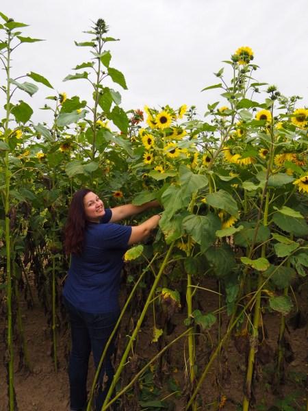 Dani at Wickham Sunflower Farm in Rochester, New York