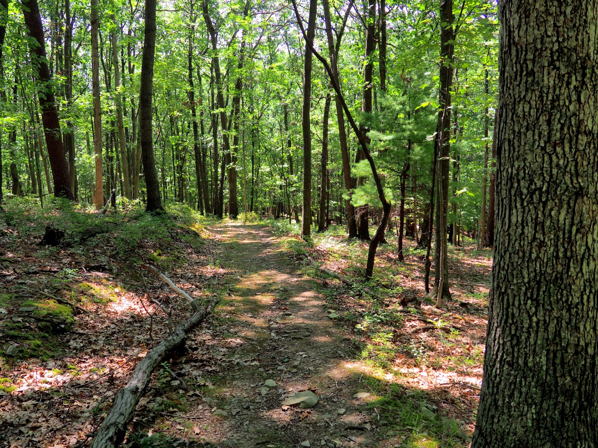 Trail at Tanglewood