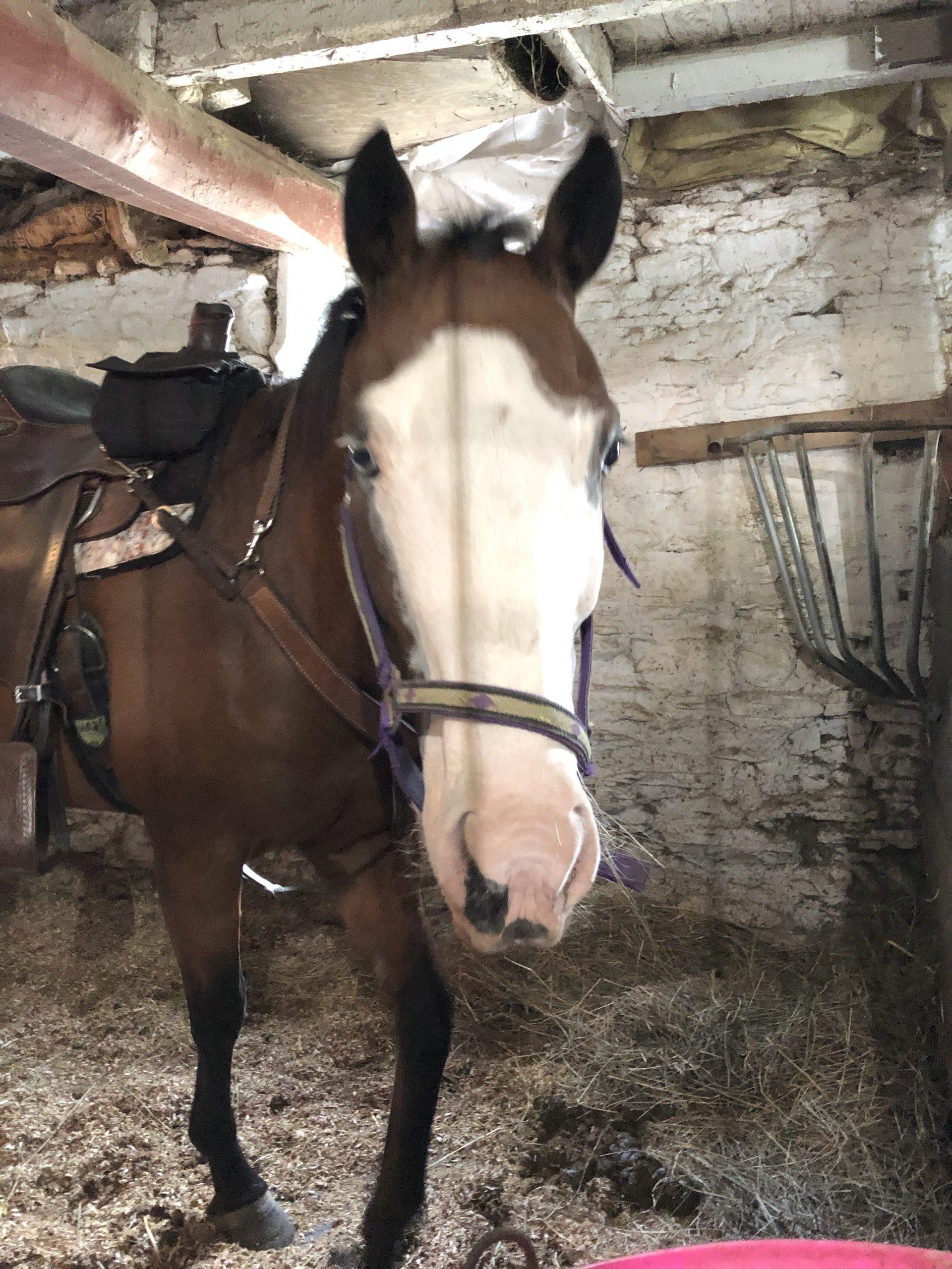 Patchwork Horseback Riding - Kash