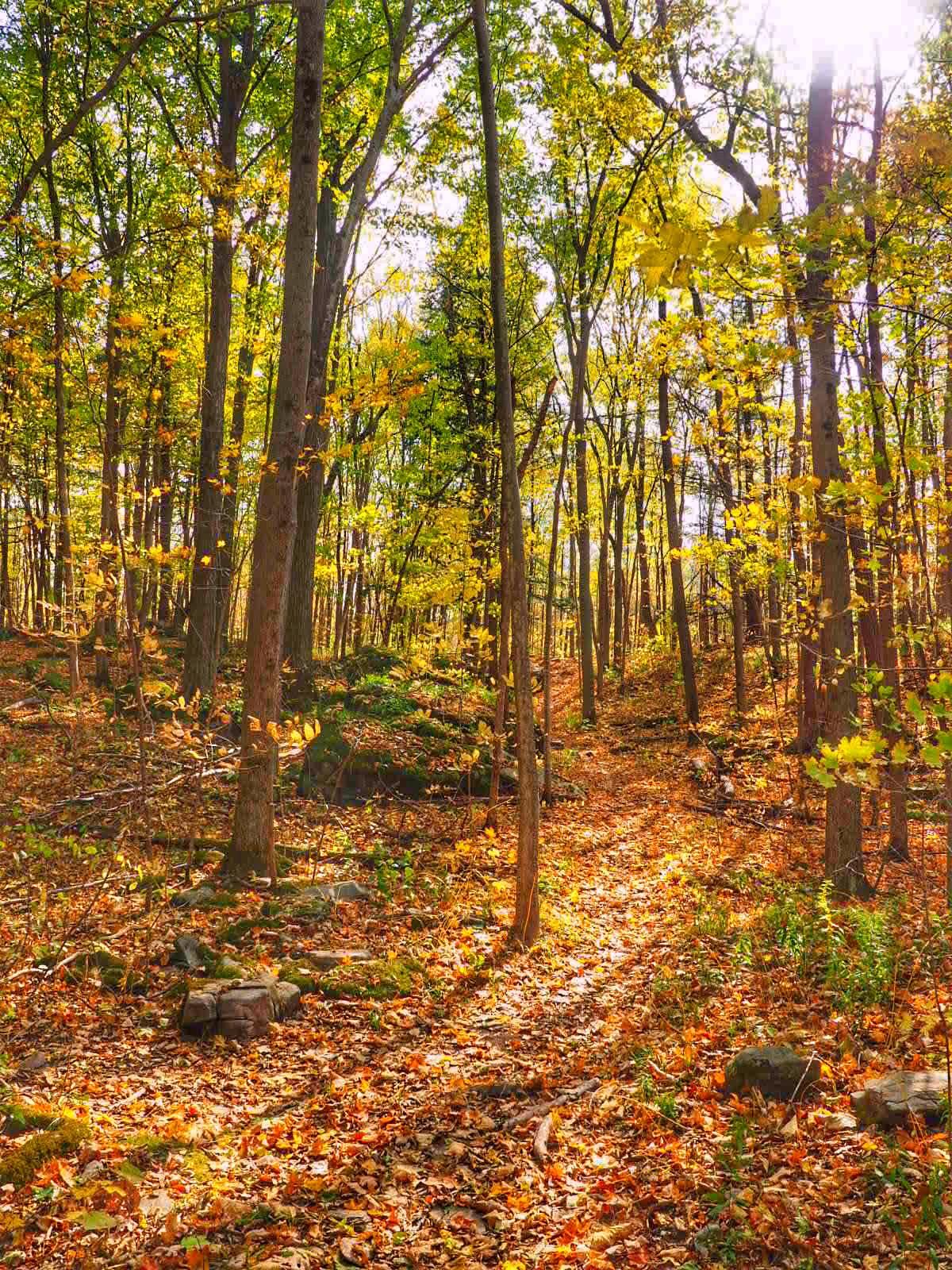 Three Falls Woods in Manlius