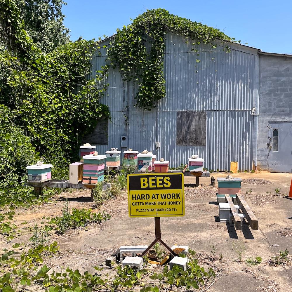 Bees at Camp North End