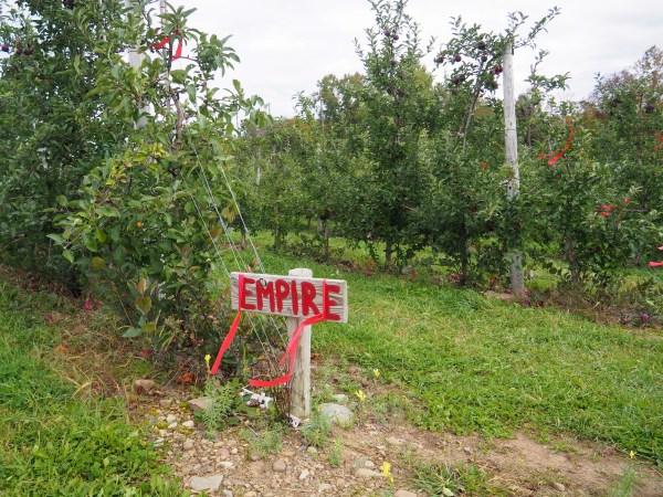 Apple Orchard in Mexico NY