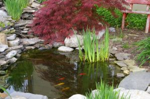 Goldfish in the pond