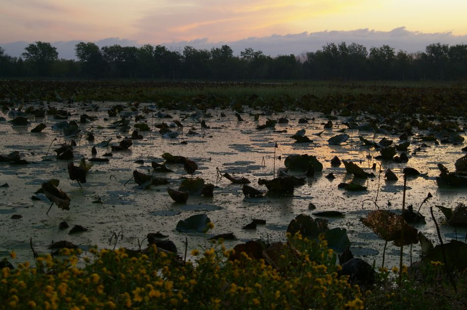 This is where the Texan alligators live.