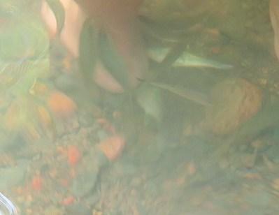 Natural Fish Spa