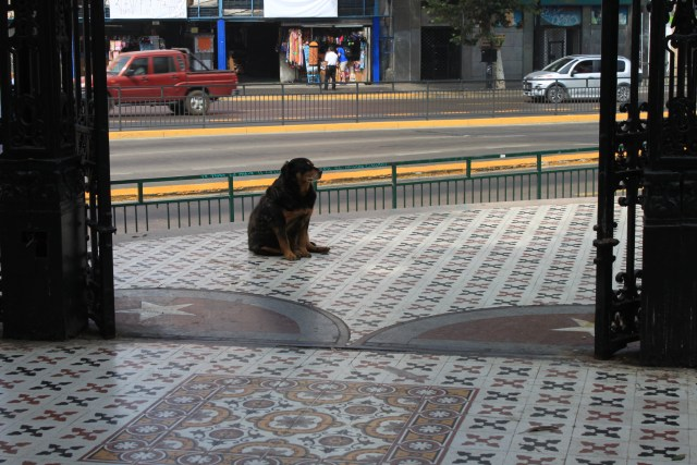 The Amazing Street Dogs of Santiago, Chile