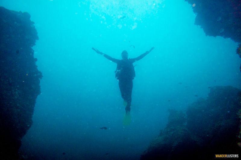 scuba diving poor knights new zealand