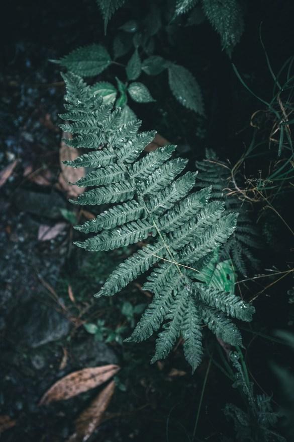 Nature Potrait - Wanderlustgary