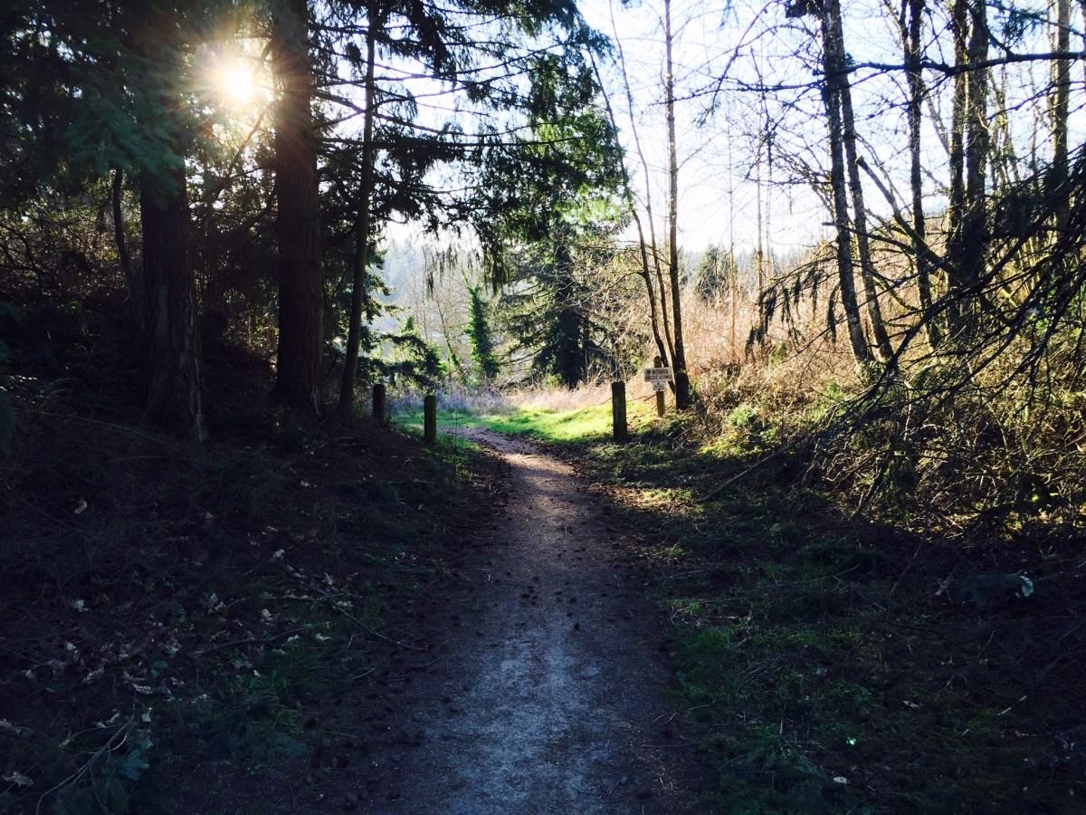 Entering the heart of the Ellen Davis trail.