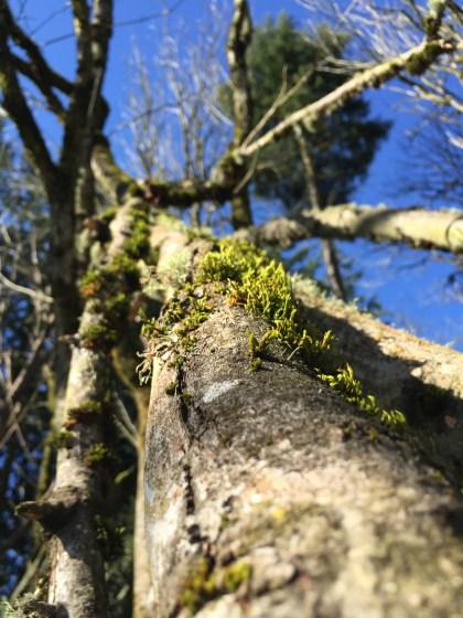 Ellen Davis woods, close up.