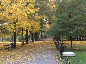 Fall_Planty2