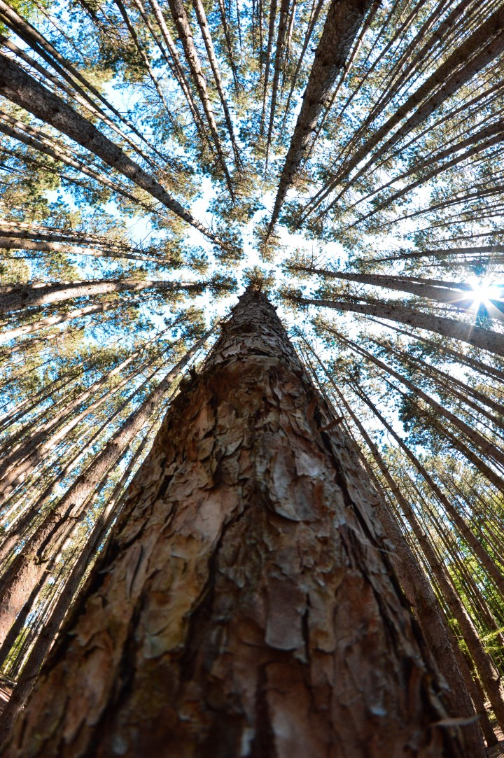 Why You Need to Visit Oak Openings