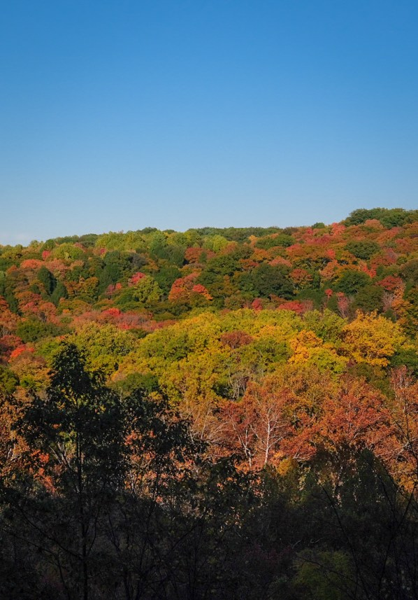 tinkers creek gorge overlook best fall hikes near cleveland