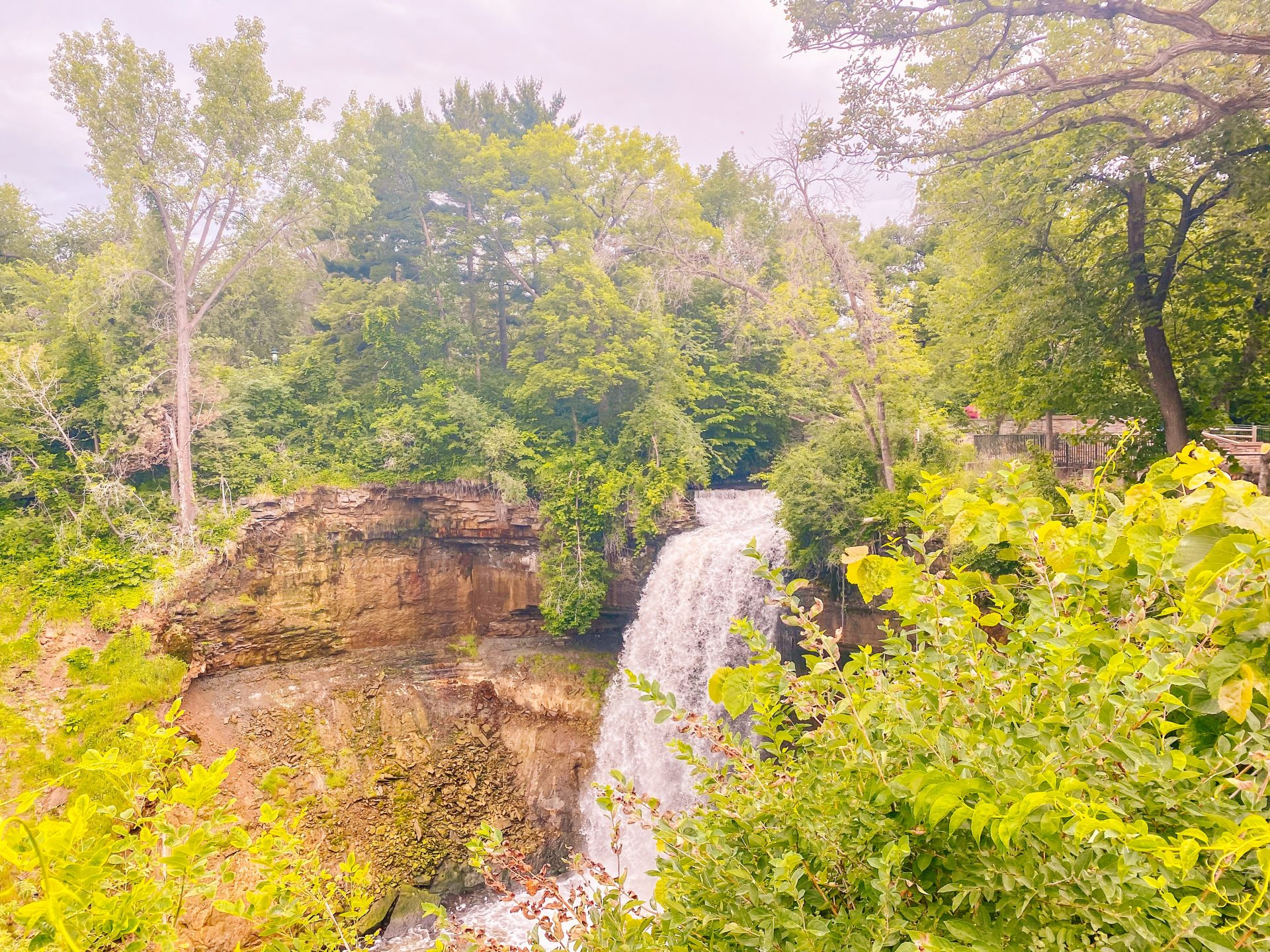 lush green trees and Minnehaha falls park in Minneapolis during the summer