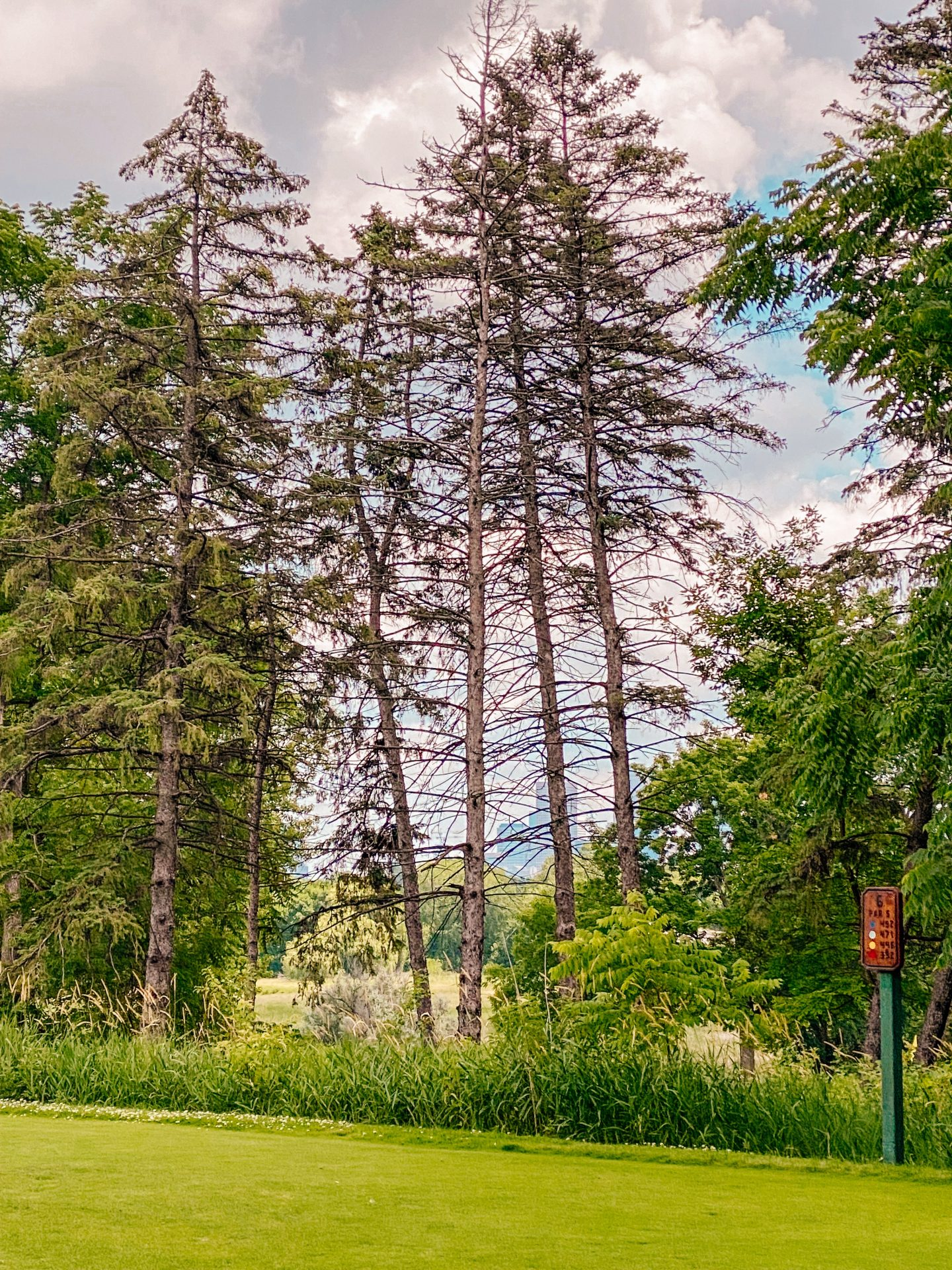 view through the trees of downtown Minneapolis at Theodore Wirth Golf Club