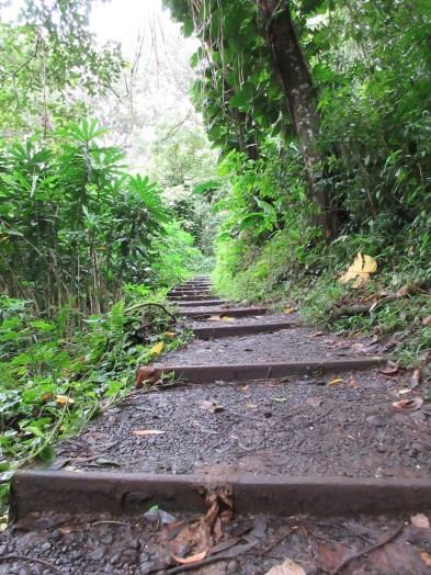 Hiking Waikamoi Nature Trail - Hawaii