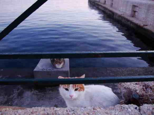 Syros, cats of Greece