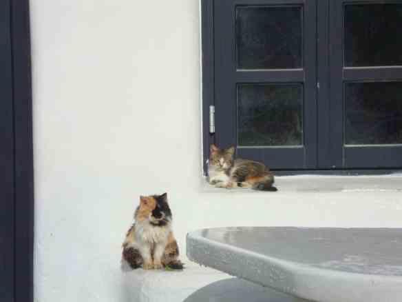 Mykonos, cats of Greece