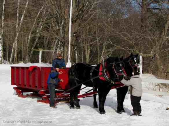 Horses in the snow with their slieigh