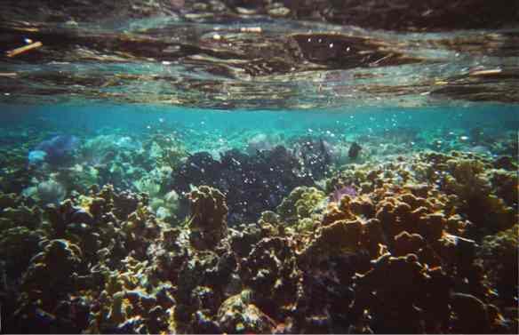 coral in Roatan, snorkeling in Roatan