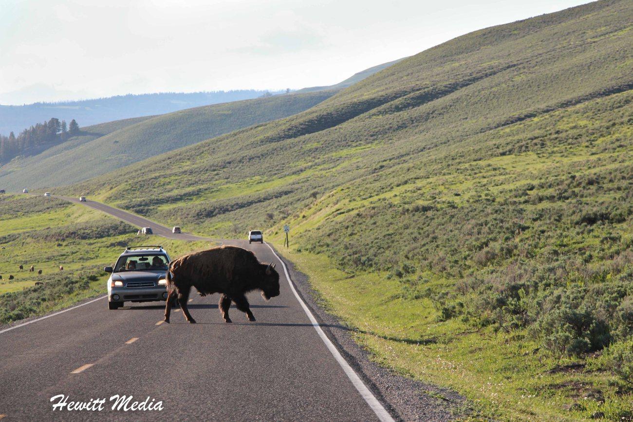 Yellowstone-1145