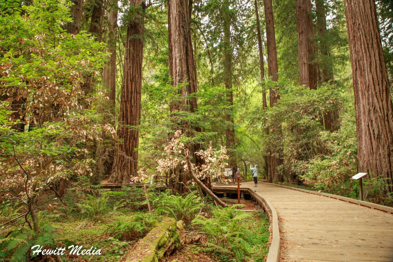 Muir Woods-4977