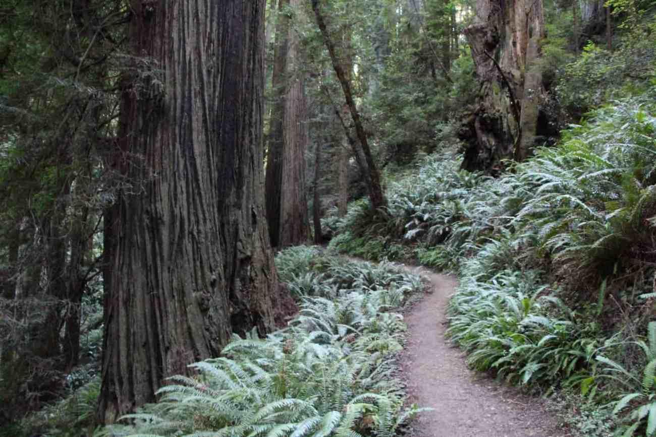 Redwood - No White Balance-5442