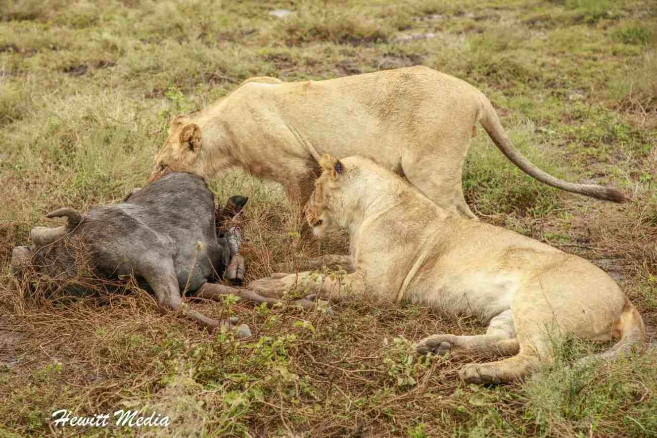 Serengeti Camping-2