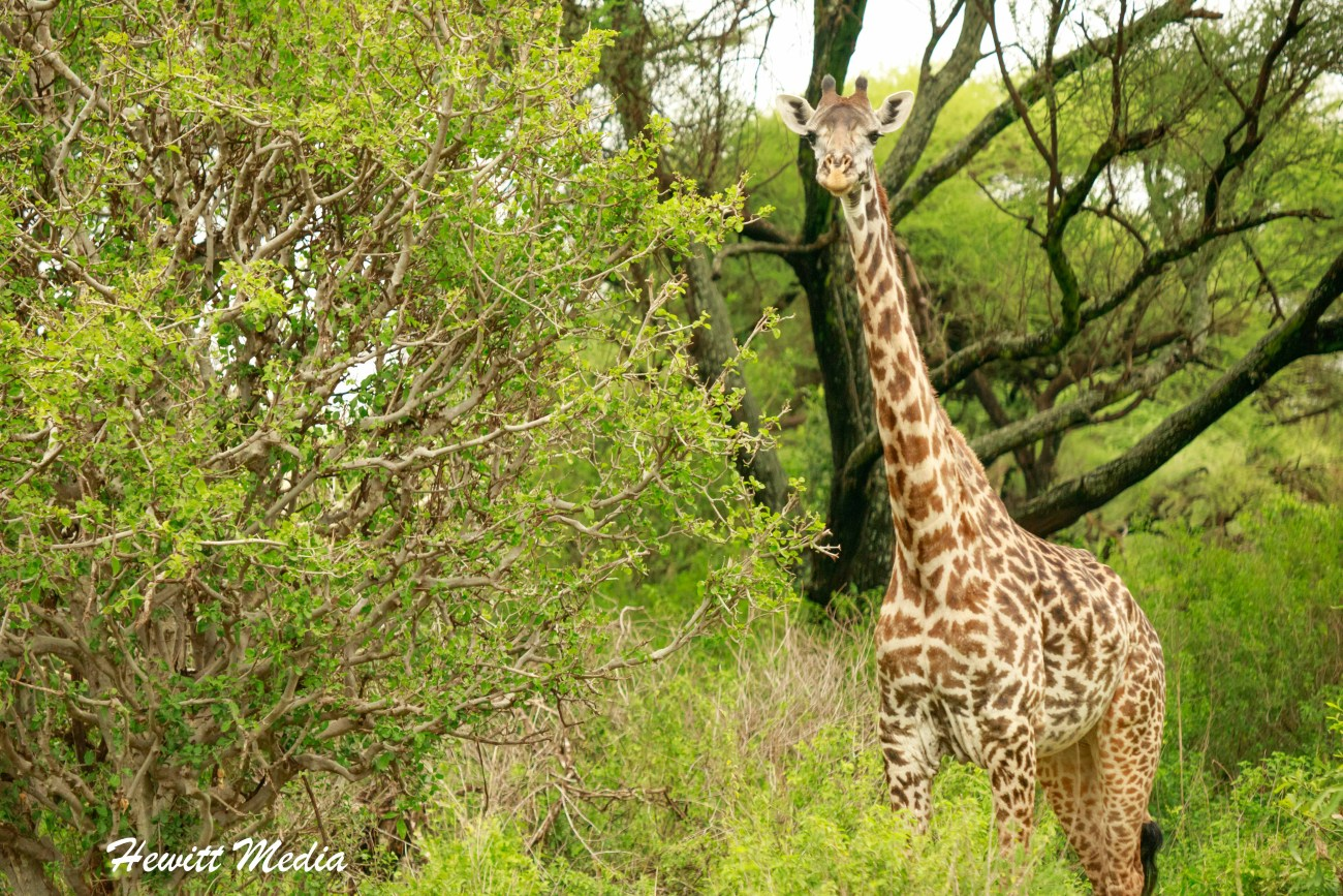 Safari Photography-1023.jpg
