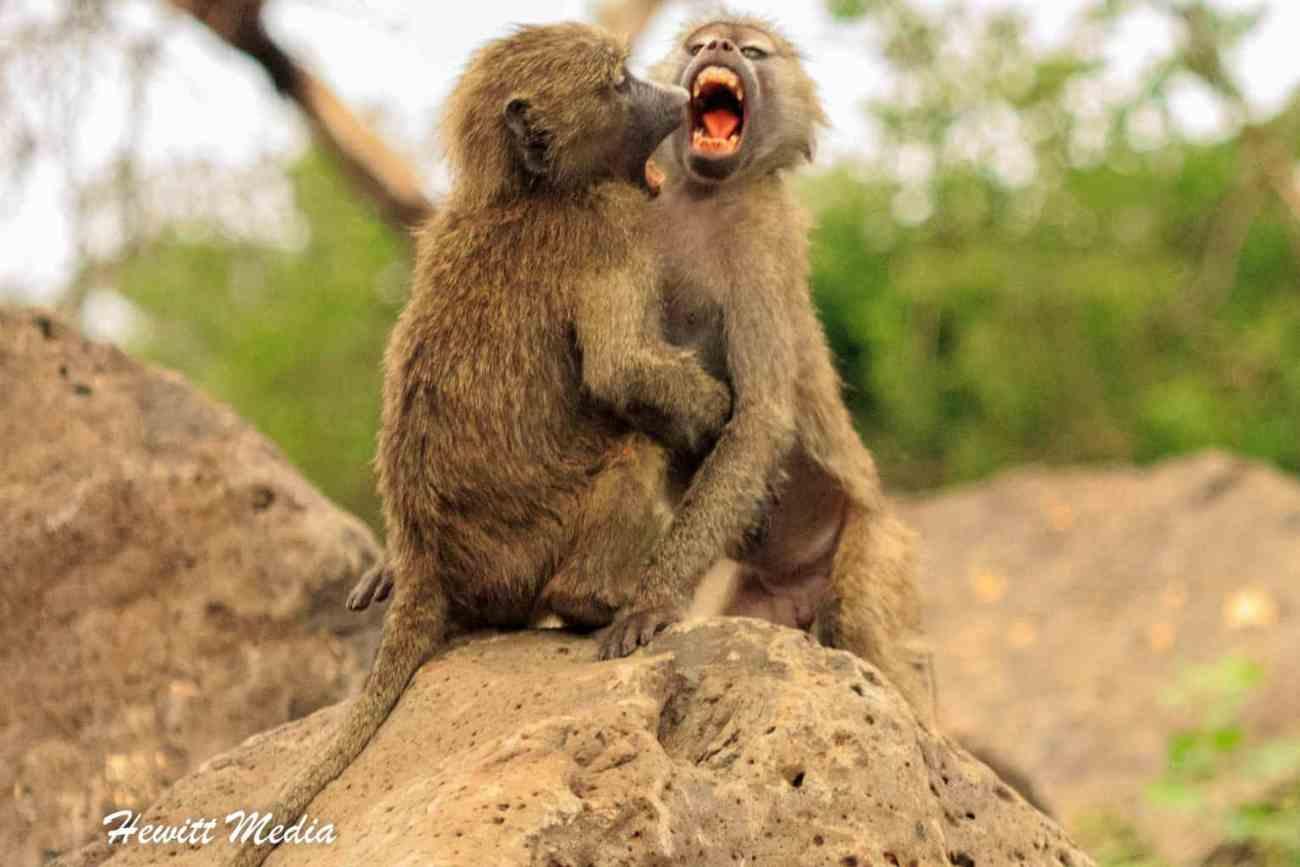 Safari Photography-20.jpg