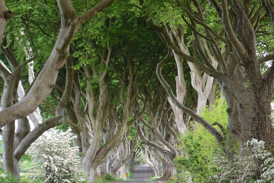 Dark Hedges 2.jpg