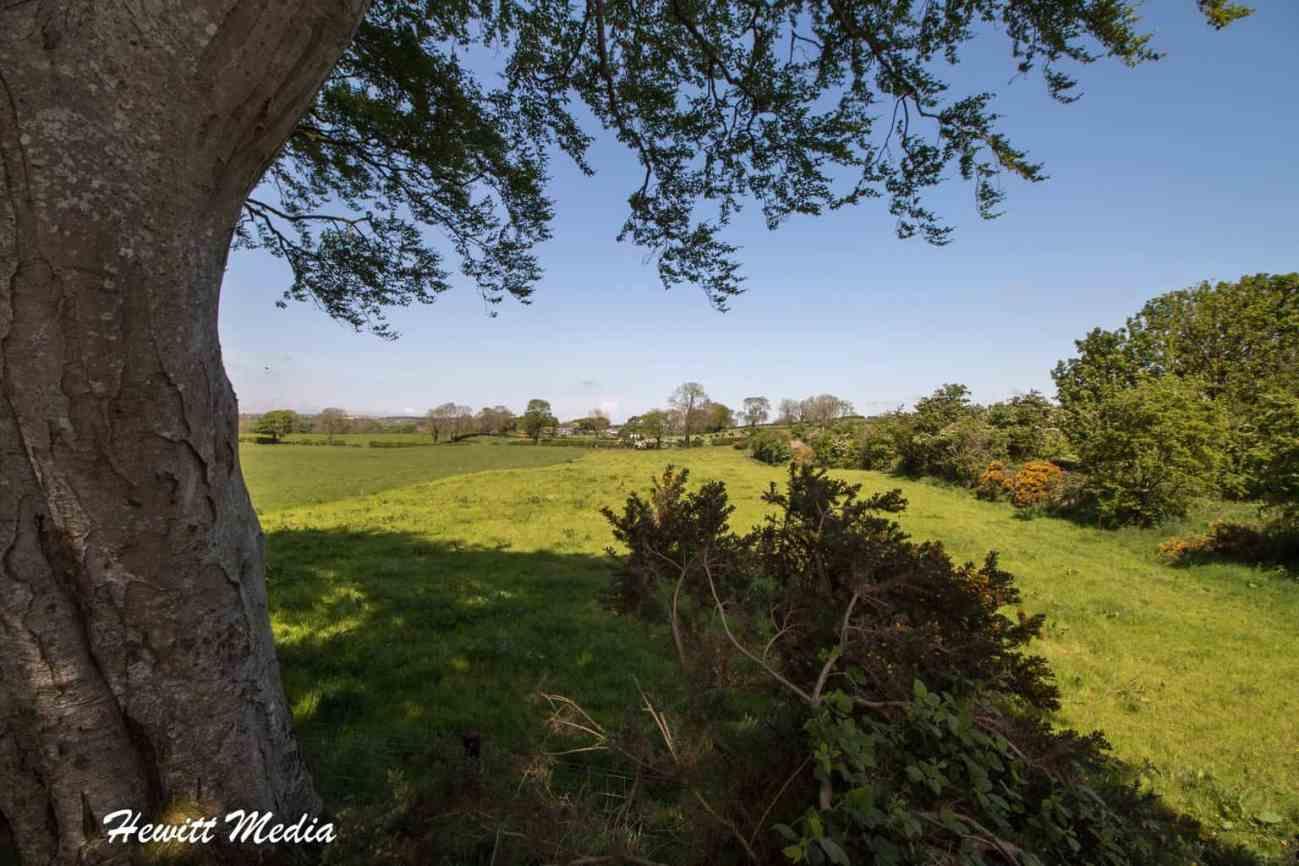 Dark Hedges in Northern Ireland