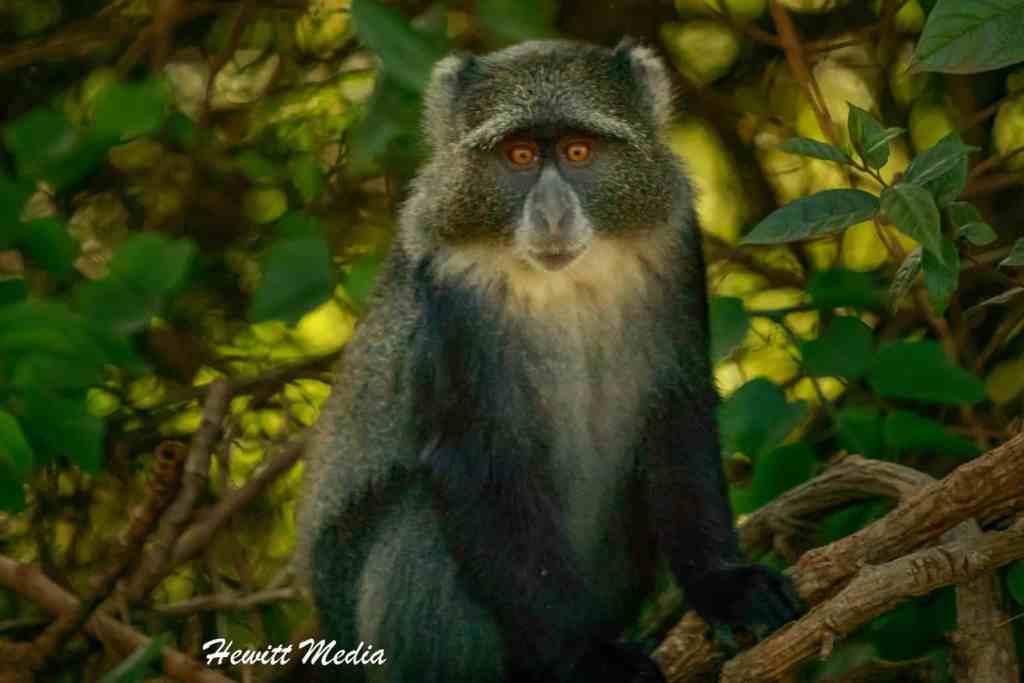 Tanzania Safari Itinerary - Arusha National Park