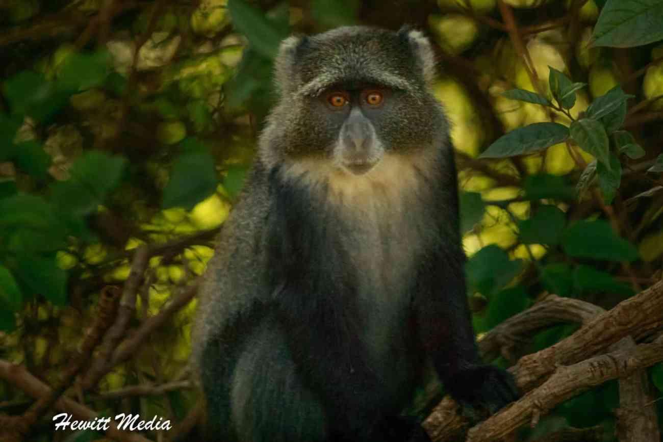 Arusha National Park-2-2