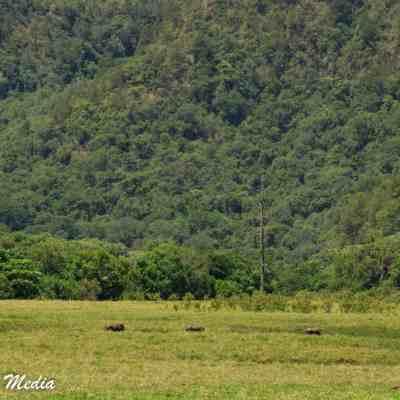 Baboon sighting while on walking safari