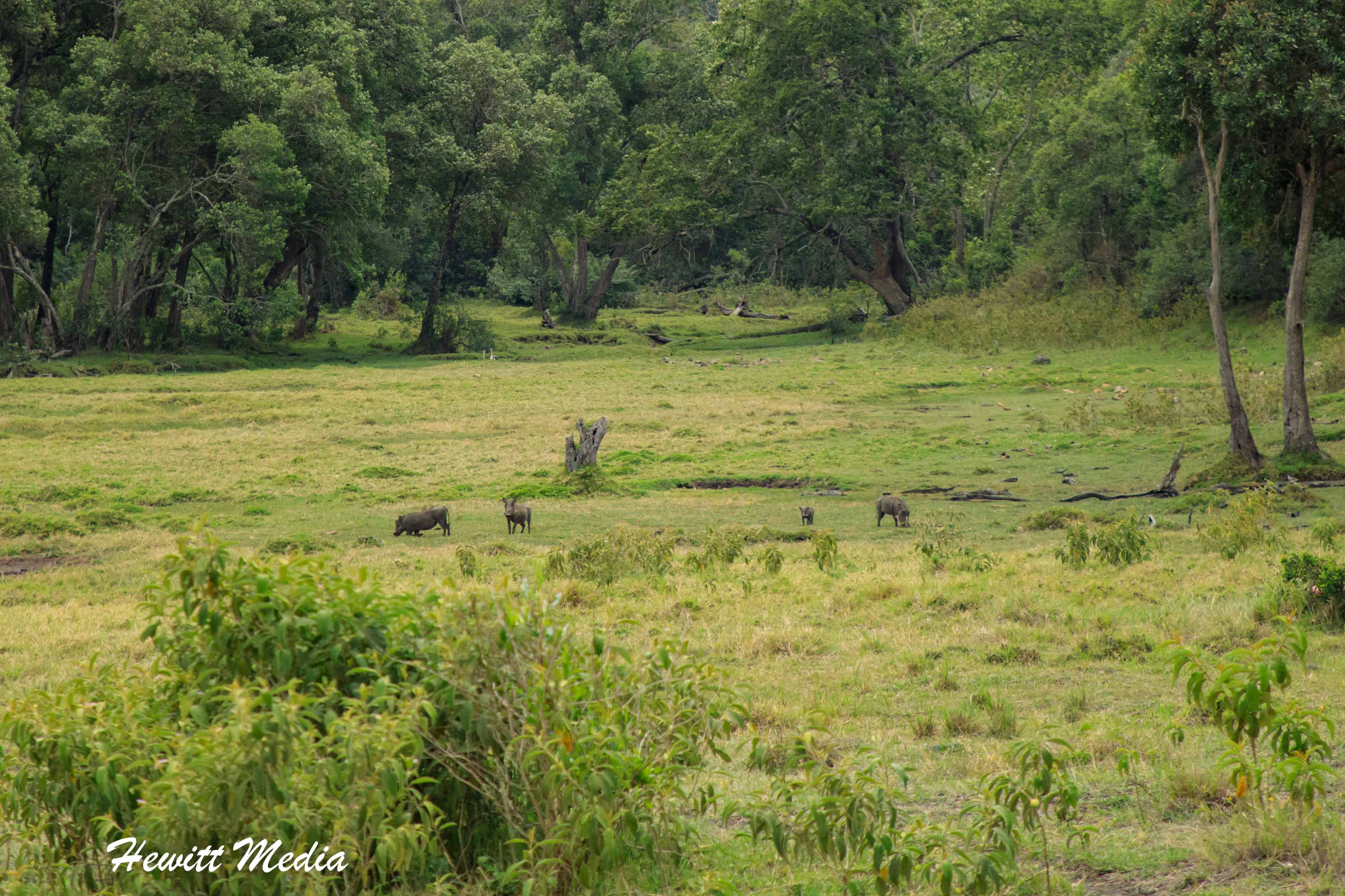 Baboons in the distance while on walking safari