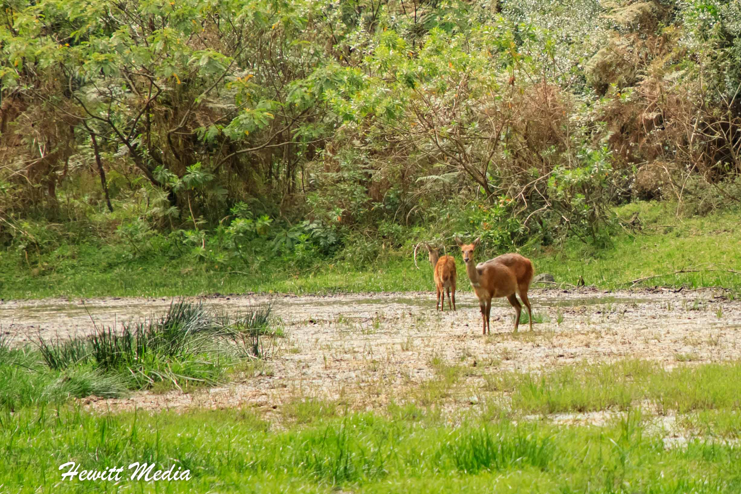 Wildlife is plentiful in Arusha National Park