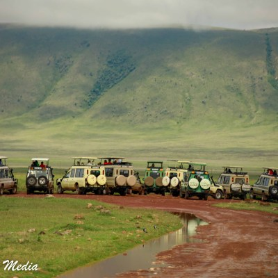 Safari Vehicles gather around a pride of lions resting