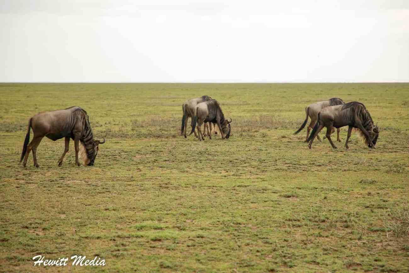 Serengeti-1389