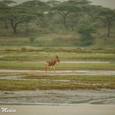 It was incredible seeing how many animals are active even in the rain in the Serengeti National Park