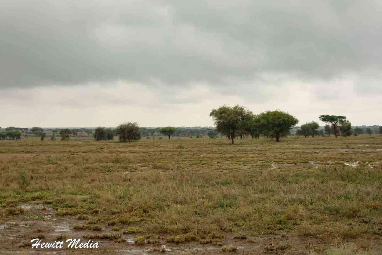 Serengeti-1581