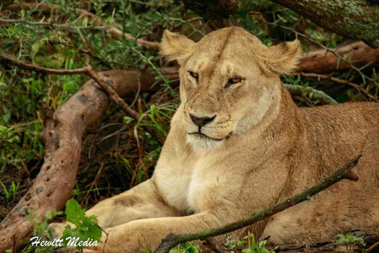 Serengeti-1599