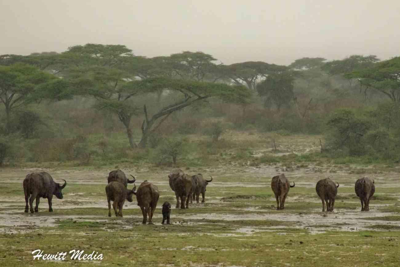 Serengeti-2-5