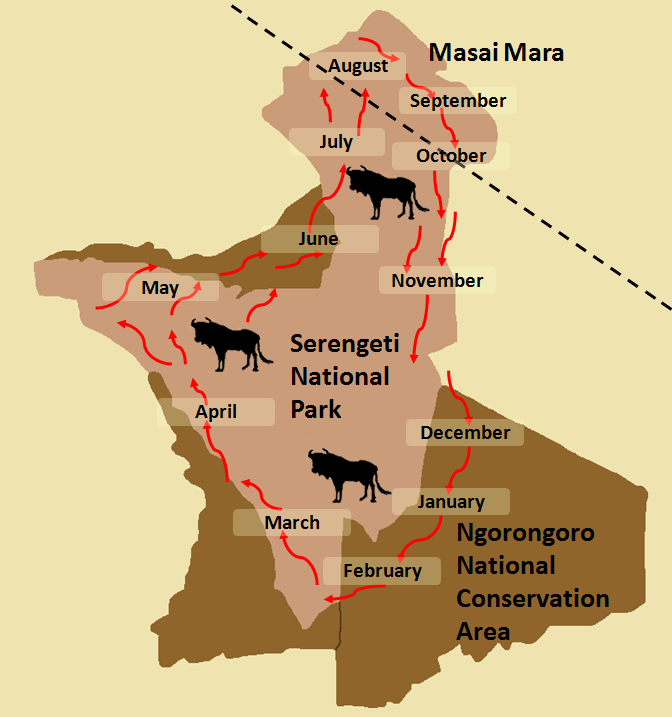Serengeti Migration Map.png