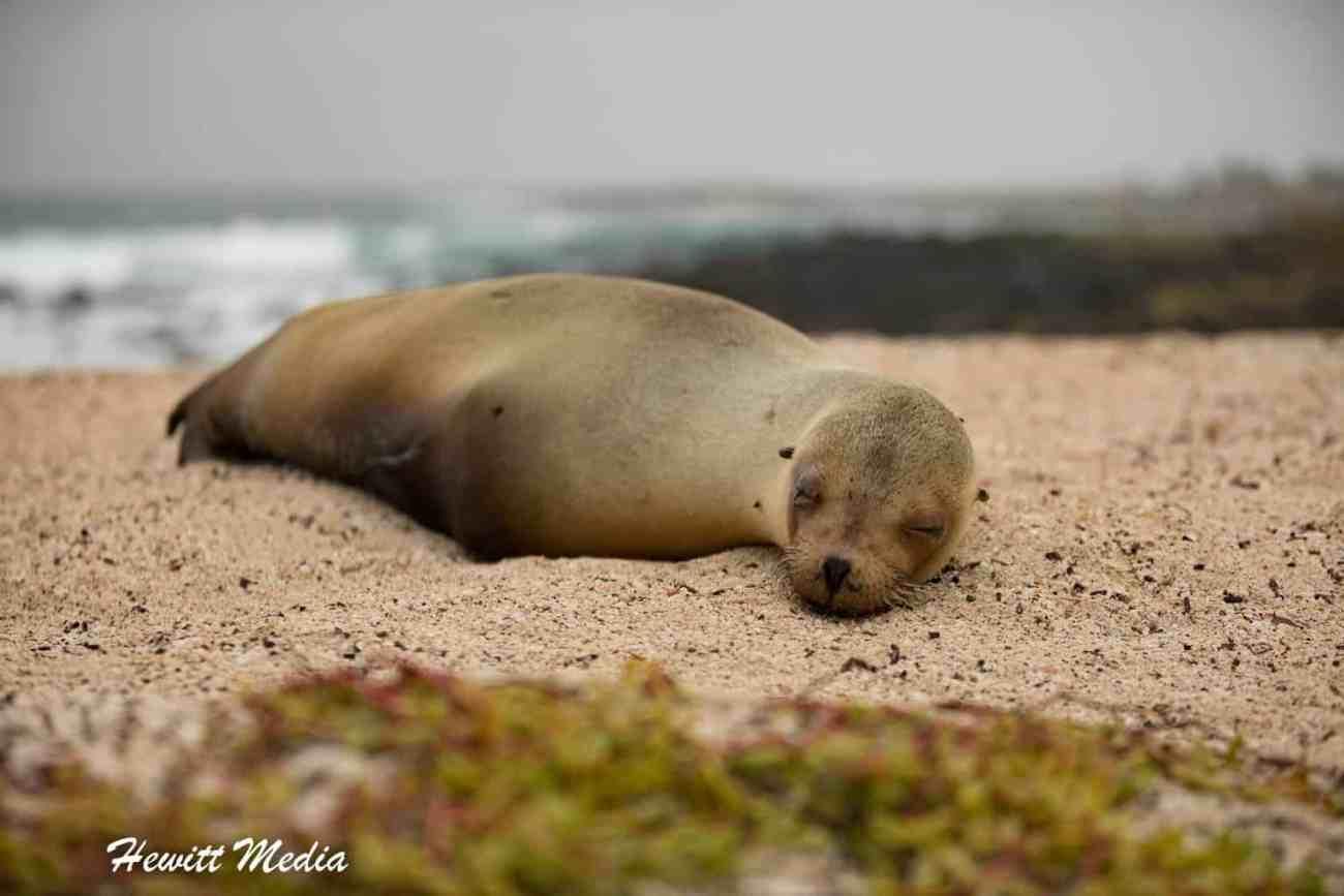 Galapagos-0391.jpg