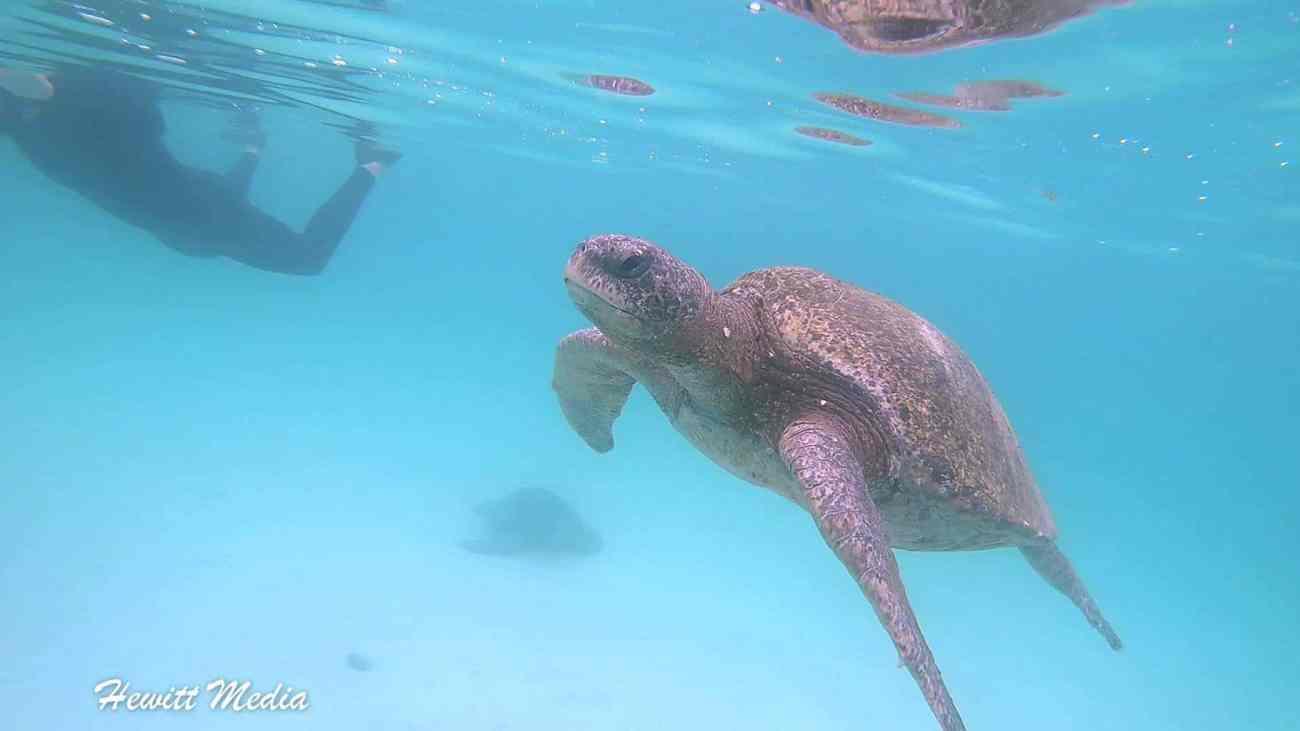 Galapagos-2.jpg