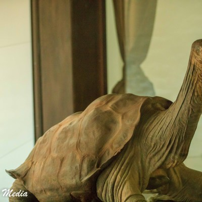 The last of its kind, this Giant Tortoise was the last of a now extinct species.