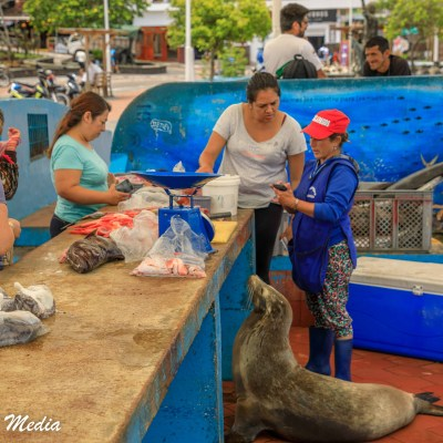 Fish Market in Puerto Ayora on Santa Cruz Island.