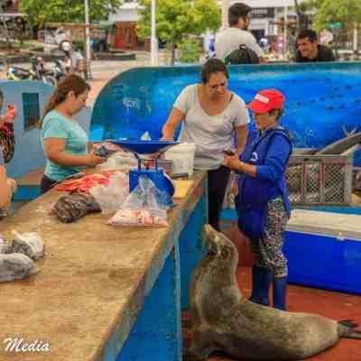Fish Market in Puerto Ayora on Santa Cruz Island.