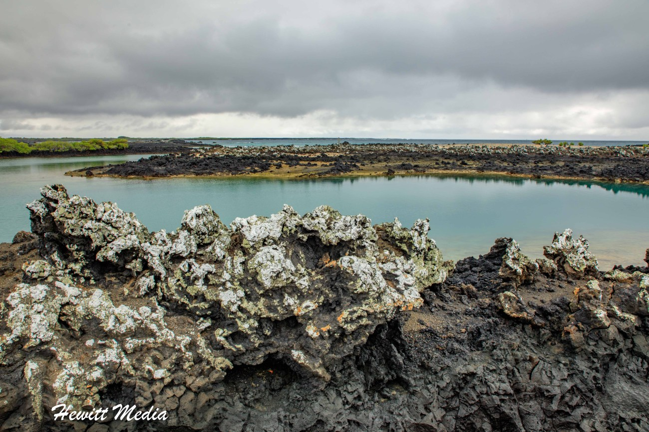 Galapagos-9648